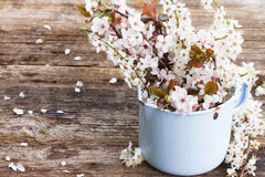 Хворостины с цветками вишни Стоковые Фотографии RF