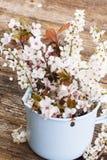 Хворостины с цветками вишни Стоковое фото RF