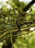 хворостины Стоковое фото RF