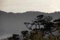 Хвоя в заходе солнца Стоковое фото RF