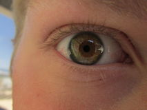 Хейзл покрасило глаз стоковые изображения