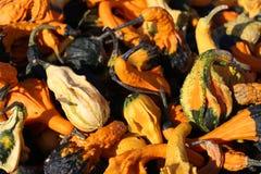 Хеллоуин и тыквы, большое время, красочная осень, Стоковые Изображения RF