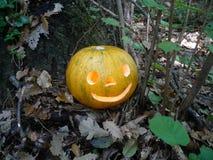 Хеллоуин в лесе Стоковая Фотография