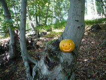 Хеллоуин в лесе Стоковые Фото