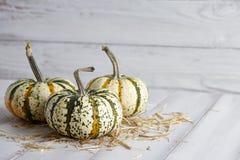 Хеллоуин striped тыквы на белых досках Стоковая Фотография