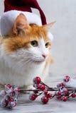 хелпер маленький santa Стоковое Фото
