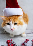 хелпер маленький santa Стоковая Фотография