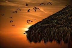 Хижина травы и тропический заход солнца стоковые фото