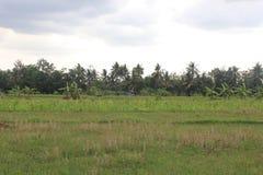 Хижины в полях риса стоковое изображение rf