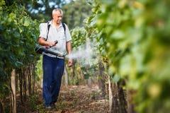 химикаты его распыляя виноторец виноградника стоковые фото