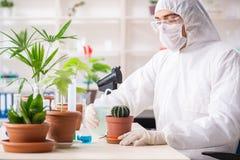 Химик биотехнологии работая в лаборатории стоковое фото