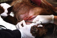 Хирургия сутуры стоковое изображение rf