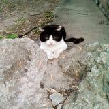 Хитро кот Стоковые Изображения