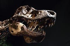хищника рта динозавра зубы головного захватнические острые ужасные Стоковое Фото