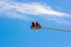 Хищники на столбе лампы Стоковая Фотография RF