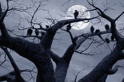 хищники Стоковые Фото
