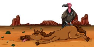 Хищник на мертвой лошади иллюстрация вектора