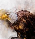 Хищник символа картины акварели птицы Америки орла иллюстрация вектора