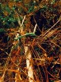Хищничая Mantis стоковое фото rf