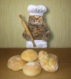 Хлебопек кота кота с ломтями хлеба стоковое фото rf