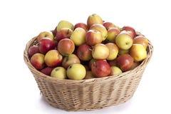 хлебоуборка корзины яблок полная органическая Стоковое Изображение