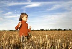 хлебоуборка осени Стоковая Фотография