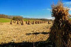 хлебоуборка падения amish традиционная Стоковое Изображение RF