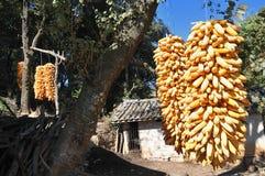 хлебоуборка плодоовощей Стоковые Фото