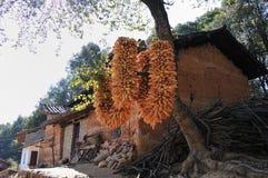 хлебоуборка плодоовощей Стоковое Изображение RF