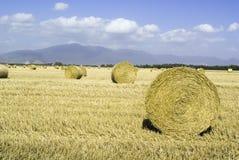 хлебоуборка полей Стоковые Фото