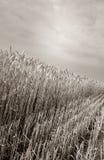 хлебоуборка поля урожая Стоковая Фотография