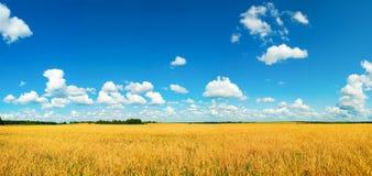 хлебоуборка поля Стоковая Фотография RF
