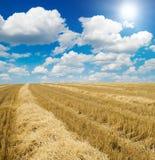 хлебоуборка поля Стоковое фото RF