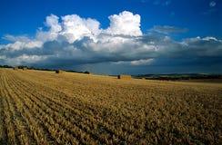 хлебоуборка поля Стоковые Изображения