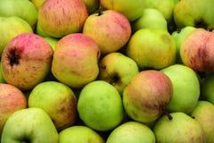 Хлебоуборка яблок Стоковое Изображение RF