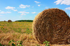 хлебоуборка стоковое изображение rf
