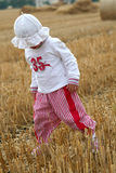 хлебоуборка Стоковая Фотография