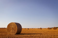 хлебоуборка Стоковая Фотография RF