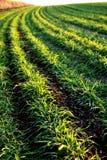 хлебоуборка Стоковое фото RF