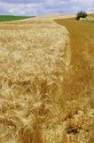 хлебоуборка Стоковое Фото