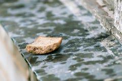 Хлеб на windowsill стоковые фотографии rf