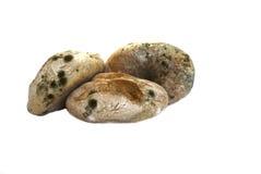 хлеб moldy Стоковое Изображение RF