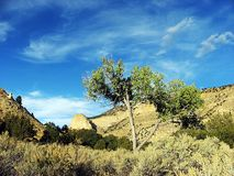 хлопок каньона Стоковое фото RF