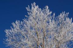 Хлопок Frost на голубом небе стоковая фотография