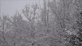 Хлопья снега на ветвях Leaveless акции видеоматериалы