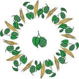 Хмели и рамка солода Улучшите для сезонной, осень, octoberfest дизайн иллюстрация штока