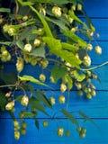 Хмель на голубой предпосылке стены стоковое фото rf