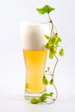 хмель стекла пива стоковое фото rf