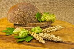 Хмель колосков хлеба стоковые фотографии rf