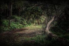 Хмурая леса темная и страшная картина стоковые фотографии rf